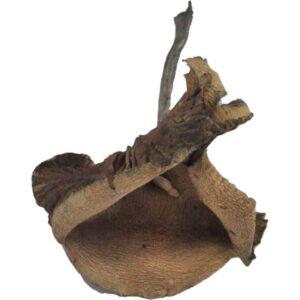 Psilocybe Cyanescens Mushrooms