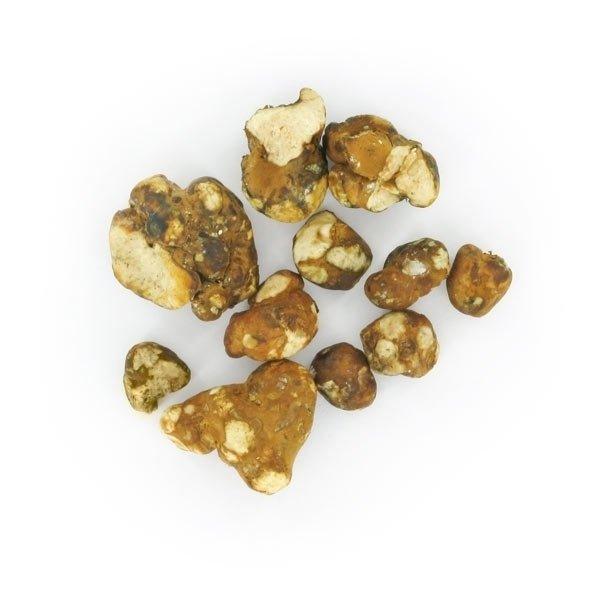 Psilocybe Tampanensis Magic mushrooms