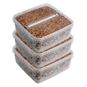 Three Extra Large Magic Mushroom Grow Kits Package deal