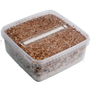Magic Mushroom Grow Kit PES Amazon XL by Mondo
